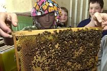 V enviro centrum se děti setkají třeba i s včelami