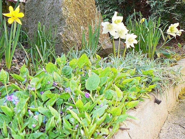 Jarní zahrada.