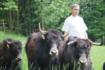 Josef Grus chová tibetské jaky již od roku 1992 v Jesenném. Má jich celkem osm, tři krávy, jednoho býka a čtyři telata.