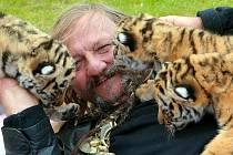 Jaromír Jo se čtyřmi mláďaty od tygřice Maji. Celkem se v cirkuse letos narodilo sedm tygřat.