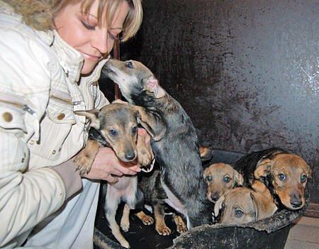 Od úterý má Dagmar Kubištová v lučanském útulku Dášenka nemalý přírůstek. Šest tříměsíčních štěňat křížence jezevčíka a jejich matku.