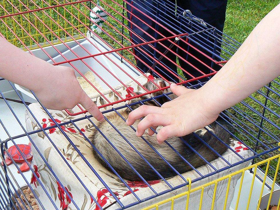 Jablonecký deník spolu se společností Sport Jablonec a útulkem pro opuštěná zvířata Dášenka pořádal Velký dětský den. Z útulku přivezli i některá svá zvířátka a tombolu ale především dětmi oblíbený skákací hrad.