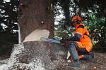 Kácení Vánočního stromu, který byl vybrán pro Staroměstské náměstí v Praze