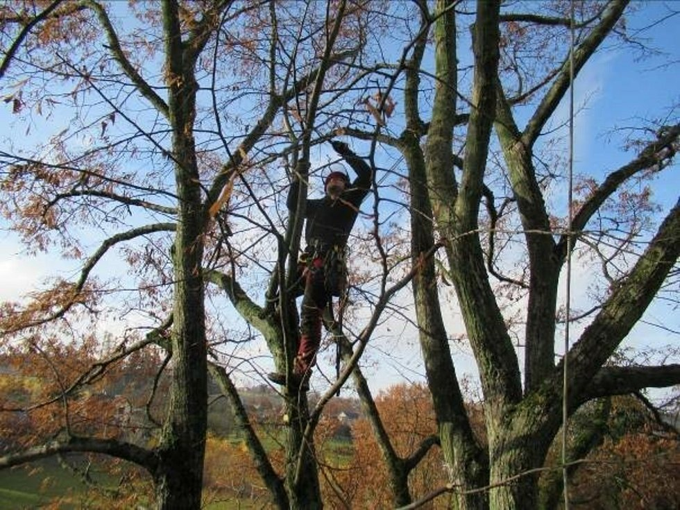 V Brodu ošetřili stromy.
