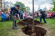 Vedení města Turnov a zástupci Výboru dobré vůle - Nadace Olgy Havlové zasadili 25. dubna v Turnově lípu na počest 85. výročí narození Olgy Havlové. Se výsadbou stromu pomohly i děti ze Základní školy Skálova v Alešově ulici.