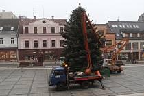 Velký smrk se převléká do vánočního.