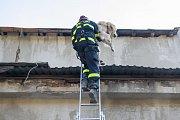 Cvičení psovodů v areálu bývalé továrny v Plavech