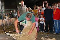 Tradiční Svatováclavská výstava ovcí a koz v areálu Kozí farmy v Pěnčíně na Jablonecku přilákala stovky lidí. Berana stříhal Milan Sluníčko z Turnova.