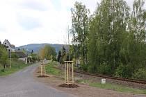 Obyvatelé ulice Letohradská doručili jabloneckým zastupitelům petici za obnovení topolové aleje.