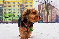 Nová Pasířská. Poslední travnatá plocha pro venčení psů. Alespoň podle majitelů svých čtyřnohých přátel, kteří nyní protestují a nechtějí, aby z tohoto volného prostranství vznikl park.