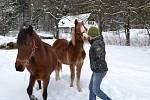 Ani krajští veterináři, kteří do Jiřetína pod Bukovou na ohlášení minulý týden přijeli, neshledali žádnou závadu v péči o zdejší koně.