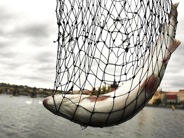 Rybí úlovek. Ilustrační snímek.