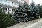 Vegetace kolem panelových domů v Jabloneckých Pasekách