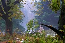Tyršův park značně zdevastovala sněhová kalamita v roce 2009.