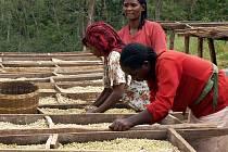Dělnice na farmě fungující na bázi Fair Trade. I ony připravují kávu pro LA Kavárnu.
