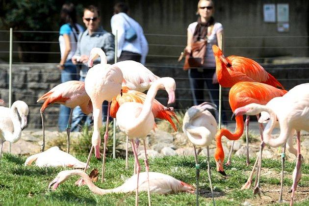 Zoo Liberec - ilustrační snímek
