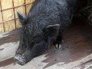 Dvacetiletého psa v noci z pátka na sobotu k smrti ubil zatím neznámý pachatel na zahradě domu v jablonecké čtvrti Kokonín. Podle dostupných informací pes dlouho štěkal. Veterinář MVDr. Jaromíir Baudyš konstatoval, že pes má mimo jiné zlomenou čelist.