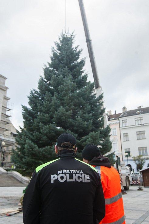 Pracovníci technických služeb instalovali 27. listopadu vánoční strom na Mírovém náměstí v Jablonci nad Nisou.