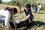 Výsadba stromů. Ilustrační snímek.
