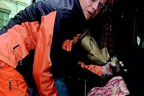 PŘÍŠERNÝ ZÁPACH. Odříznuté a stažené hlavy skotu ležely u silnice nedaleko Jablonce. Okamžitě po zavolání pracovníka jabloneckého oddělení životního prostředí vyjela na místo Dagmar Kubištová.