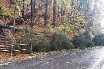 Palackého sady v Semilech potřebují razantní zásah. Přestárlé stromy padají i na silnici.