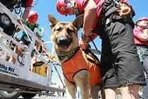 V Jablonci je již tradicí společná akce složek Integrovaného záchranného systému. Na snímku psovodi z Horské služby Jizerských hor.