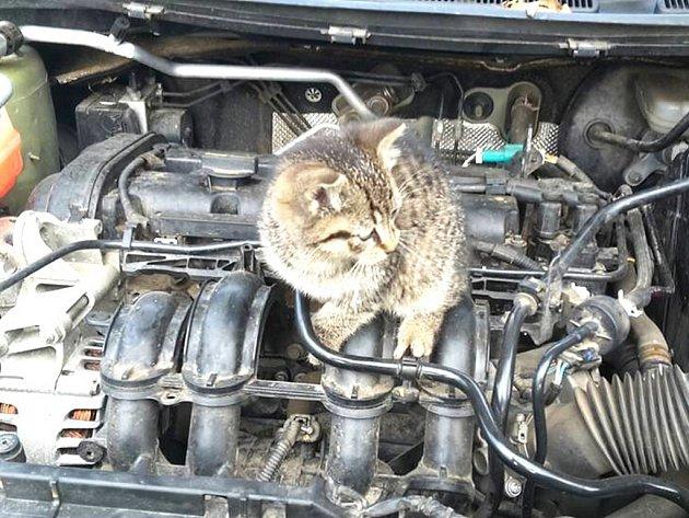 Kotě ze Mšena mělo štěstí, řidič slyšel jeho mňoukání.