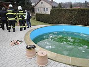 Jezevec spadl do bazénu.