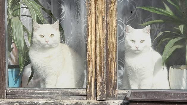 Kočka. Ilustrační snímek.