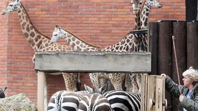 Zoologická zahrada Liberec. Ilustrační snímek