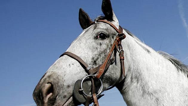 Akce s koňmi. Ilustrační snímek.