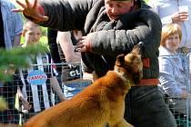 Na kynologickém cvičišti proběhla soutěž psovodů. Jednou z disciplín bylo i zadržení figuranta na kole. V této disciplíně si zdatně vedl pes Bodie psovoda Doležala z Vojenského útvaru Stará Boleslav.