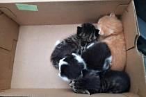 Krabici s koťaty našly děti na autobusové zastávce v Loužnici.