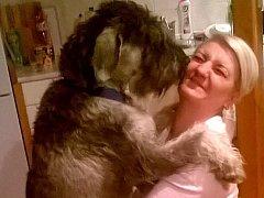 To je psí láska a přízeň! To chlupaté oblíznutí od fenky velkého knírače Kali si Janeta Mačudová nechá s radostí líbit. Aby ne. Když zvíře o víkendu hlídala, zachránilo jí život.
