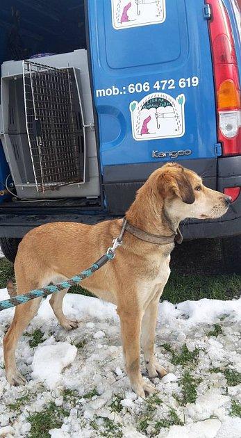Znevhodných podmínek byl odebrán pes na Smržovce. Vbudoucnu tak dostane šanci na milujícíc domov a pečující rodinu.