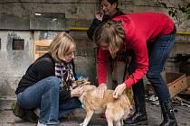 Veterináři bez hranic bezplatně psy bezdomovců očkují