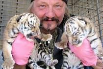 Nedávno narozená tygří mláďata v cirkusu Joo.