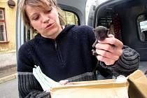 Pro čtyři opuštěná koťata si přijela Dagmar Kubištová z lučanského útulku.
