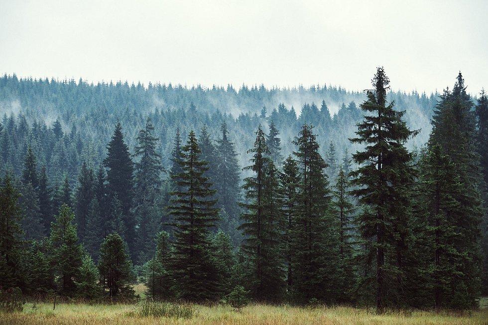 Běhej lesy 2020.