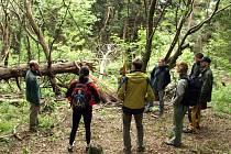 Společnost přátel přírody Čmelák se o Nový prales stará již léta