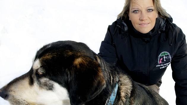 HORÁC je velký krásný pes, zřejmě kříženec malamuta nebo husky. Je to původem nalezenec, který zůstal u rodiny z Jablonce. Je ale dost temperamentní, nikdo z rodiny na něj nestačil a neměl potřebný čas na výchovu. Horác skončil v útulku. Začal totiž utíka