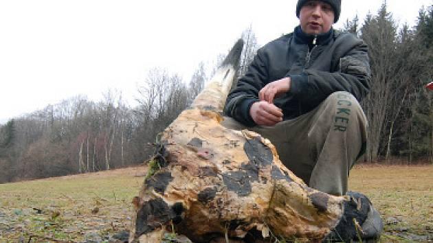 Kravskou hlavu našel Jiří Vrkoslav mladší na pronajaté pastvině, když jel s traktorem pro dřevo. Tvrdí, že ji tam určitě nalíčili myslivci jako újeď na lišky. Ti se však brání. Nejenže je to neetické, ale nedovoluje jim to ani platný zákon.