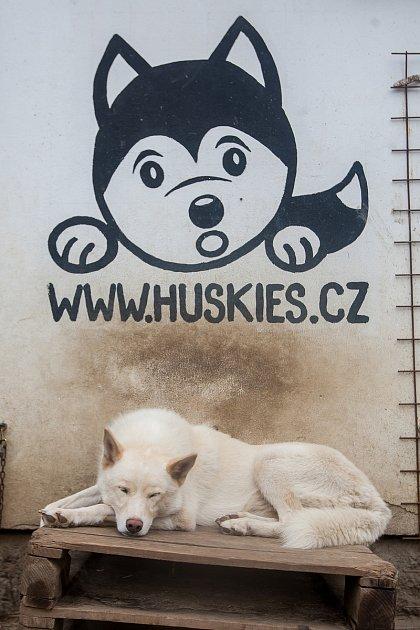 Dětský letní kurz spolárními psy, Husky camp, pořádá musherka Jana Henychová vHorním Maxově na Jablonecku pro děti svých známých. Snímek je z21. července.