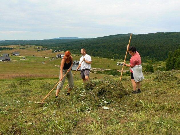 Dobrovolníci a příznivci JJHS shrabali biomasu z Upolínové louky, která se nachází na Bukovci.