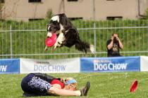 Dogfrisbee: je to sportovní disciplína, která vypadá jako hra a jejíž kořeny pochází z USA na počátku 70 let.