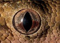 6. Čí jsou to oči?  a) zmije obecná b) slon africký c) hroznýš královský mexický