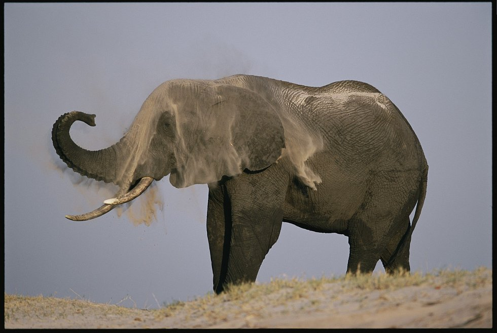 Slon v písku