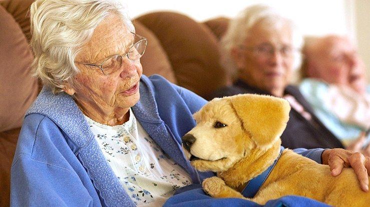 Nejnovějším robotickým kamarádem je štěně zlatého retrívra.