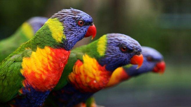 Ptáci uctívají své mrtvé promyšlenými pohřebními obřady