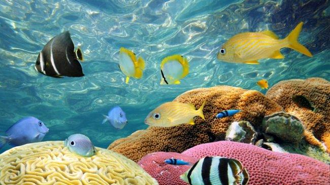 Proč musíme chránit oceány? Jak jejich záchrana může ovlivnit naše životy?